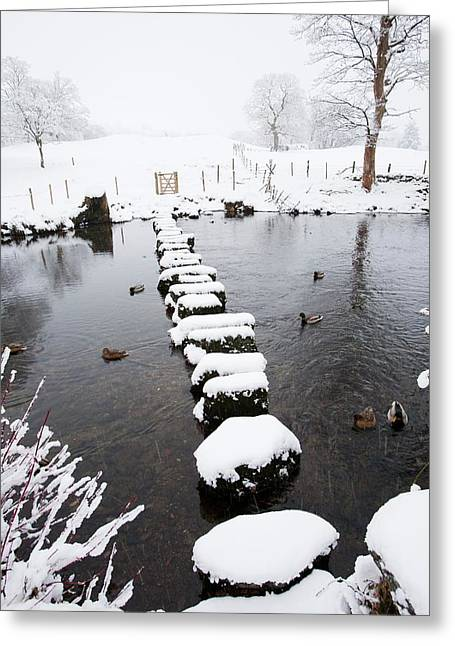 Stepping Stones Across A River Greeting Card by Ashley Cooper