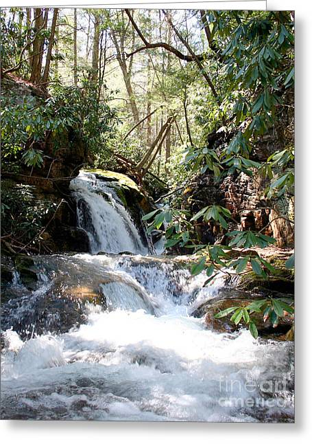 Stoney Creek Greeting Card by Annlynn Ward