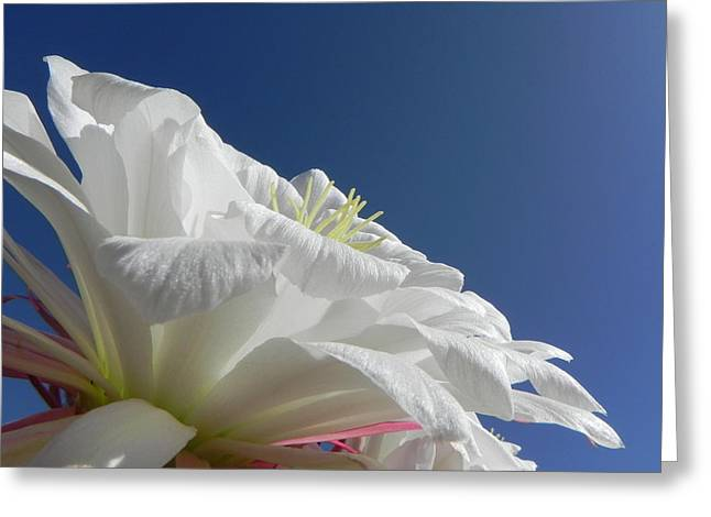 Greeting Card featuring the photograph Striking Contrast by Deb Halloran