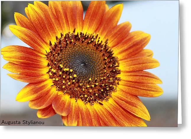 Sun Flower Greeting Card by Augusta Stylianou
