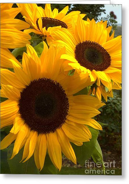 Greeting Card featuring the photograph Sunflowers by Arlene Carmel