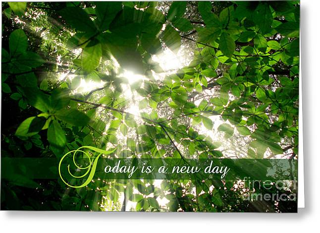Sunlight Streaming Through Leaves Trees In A Forest Greeting Card