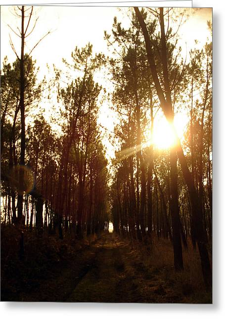 Sunrise Pin Tree Forest Greeting Card by Michel Mata