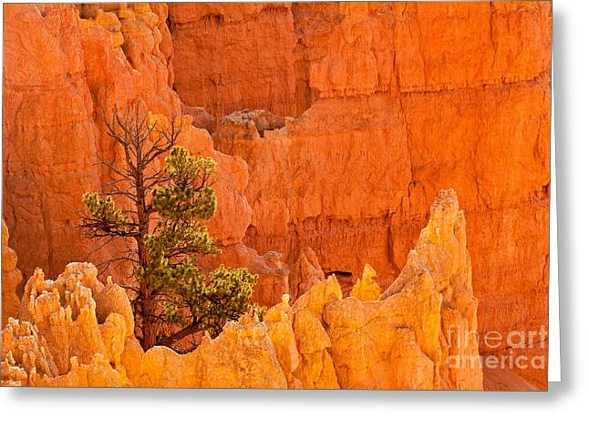 Sunset Point Bryce Canyon National Park Greeting Card