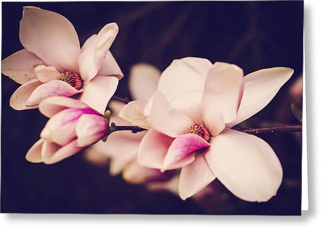 Sweet Magnolia Greeting Card by Sara Frank
