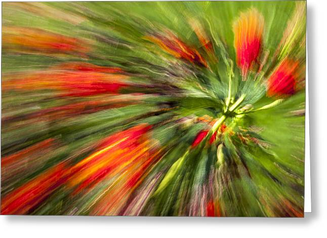 Swirl Of Red Greeting Card by Jon Glaser