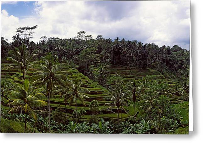 Terraced Rice Field, Flores Island Greeting Card by Panoramic Images