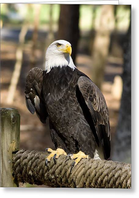 The Eagle Has Landed Greeting Card by B Wayne Mullins