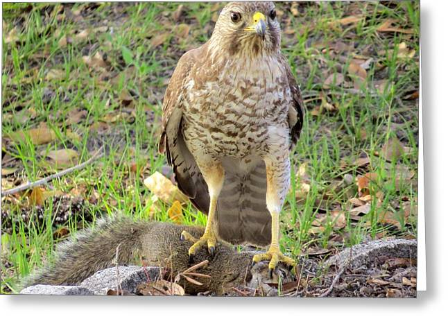 The Hawk Caught A Squirrel Greeting Card by Zina Stromberg