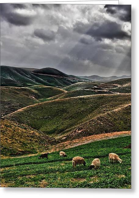 The Lord Is My Shepherd Judean Hills Israel Greeting Card by Mark Fuller