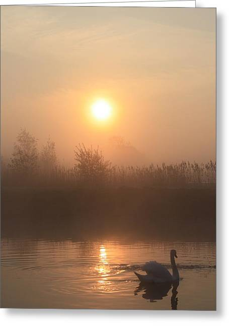 Greeting Card featuring the photograph The Peace Of Dawn by Linsey Williams