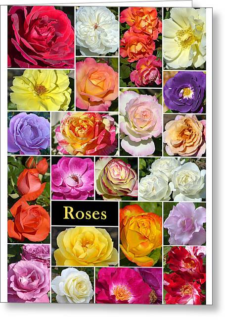 Greeting Card featuring the photograph The Wonderful World Of Roses by Cindy McDaniel