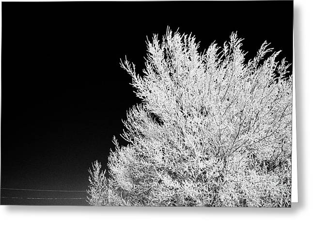 thick hoar frost on bare tree branches against deep blue sky during winter Forget Saskatchewan Canad Greeting Card by Joe Fox