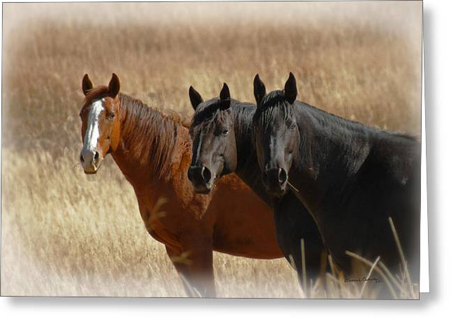 Three Horses Greeting Card