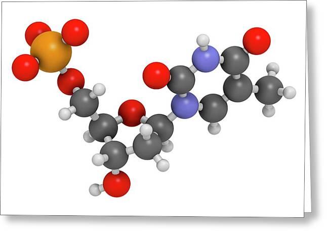 Thymidine Monophosphate Molecule Greeting Card