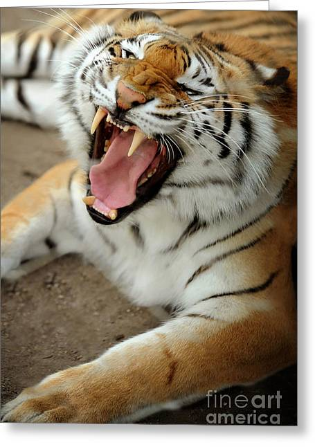 Tiger Greeting Card by HD Connelly