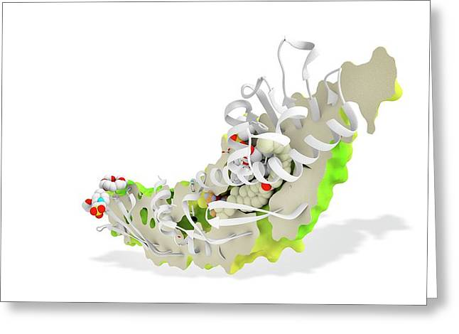 Torcetrapib And Cholesterol Greeting Card by Ramon Andrade 3dciencia