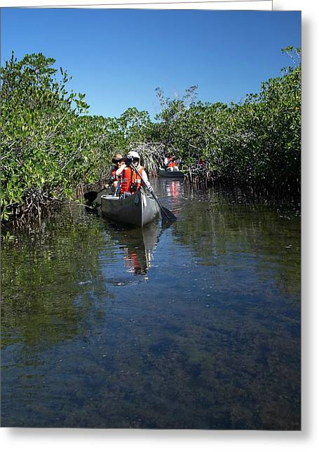 Tourists Canoeing In Mangrove Swamp Greeting Card by Jim West
