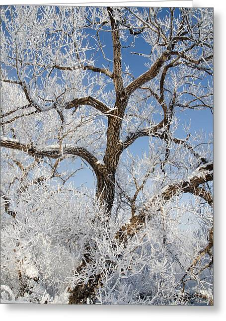 Tree By The River. Covered With Hoar Frost. Greeting Card by Rob Huntley