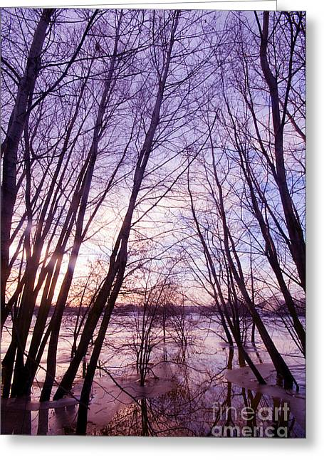 Trees In Water Greeting Card by Michal Bednarek