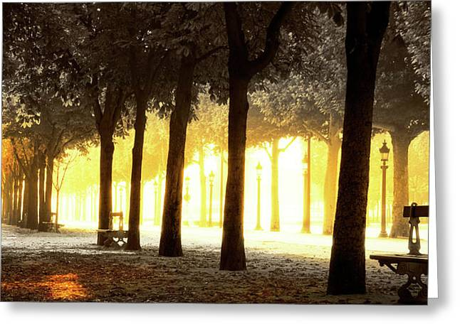 Trees On Both Sides Of A Walkway Greeting Card