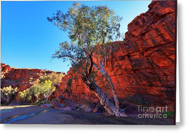 Trephina Gorge Greeting Card