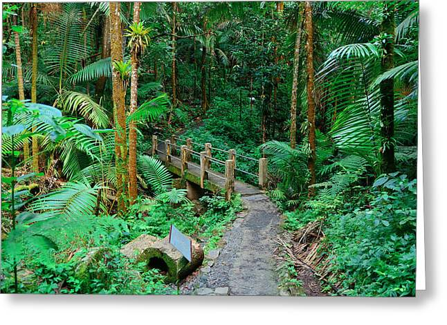 Tropical Rain Forest In San Juan Greeting Card