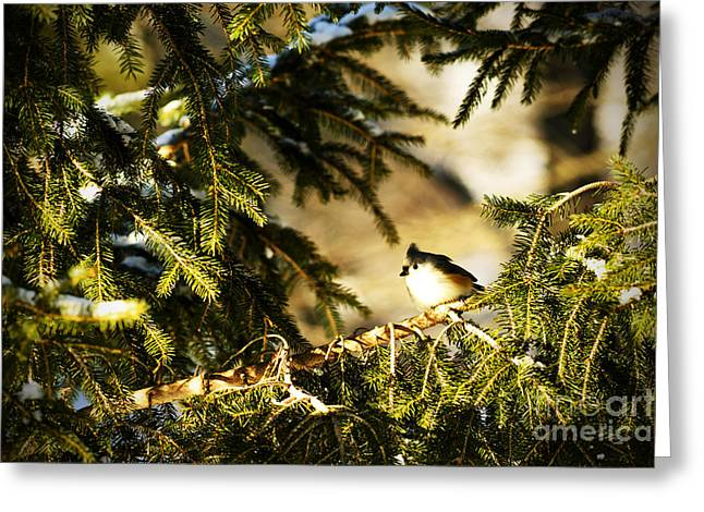 Tufted Titmouse Greeting Card by Thomas R Fletcher