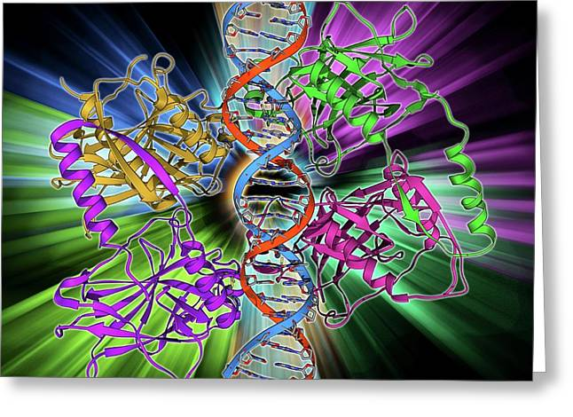 Tumour Suppressor Protein With Dna Greeting Card