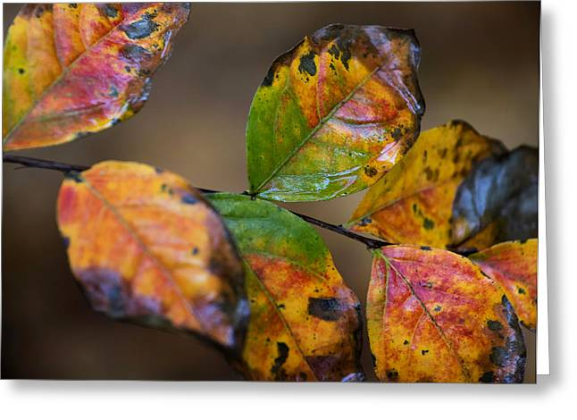 Greeting Card featuring the photograph Turning Leaves by Stephen Anderson