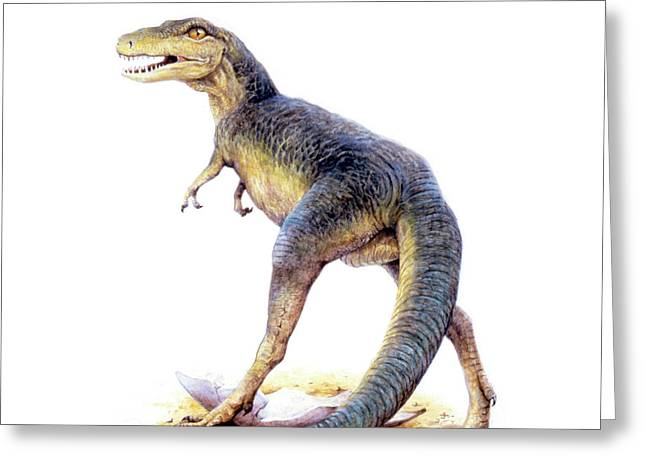 Tyrannosaurus Rex Greeting Card by Deagostini/uig