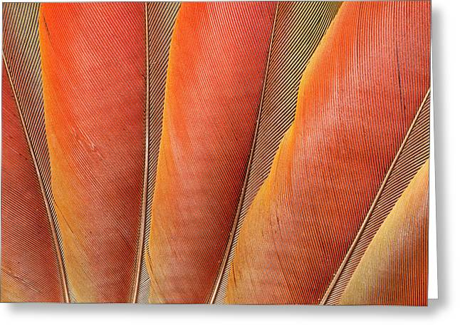 Underside Wing Coloration Greeting Card by Darrell Gulin