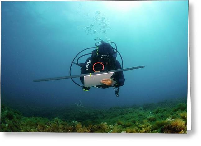 Underwater Survey Greeting Card by Photostock-israel