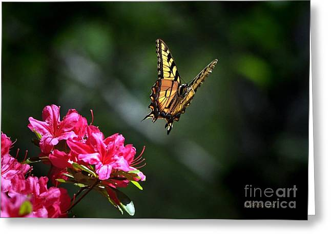 Up And Away Greeting Card by Nava Thompson