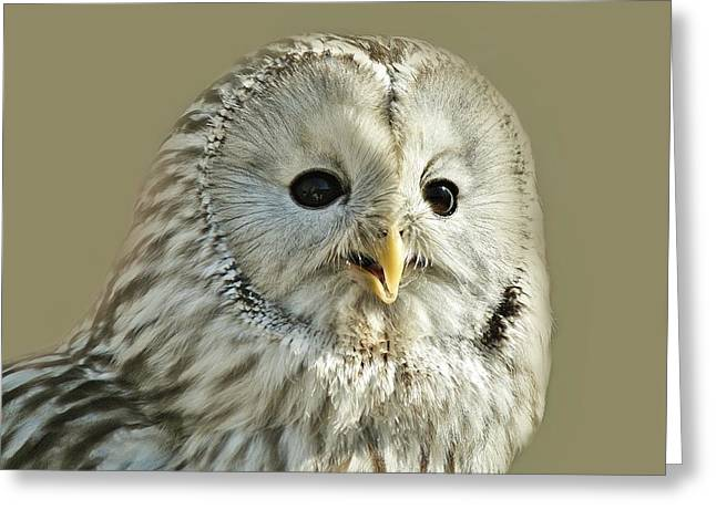 Ural Owl Greeting Card by Paulette Thomas