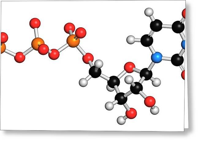 Uridine Triphosphate Nucleotide Molecule Greeting Card by Molekuul