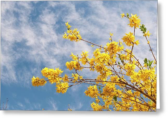 Usa, Co, Denver Denver Botanic Gardens Greeting Card by Trish Drury