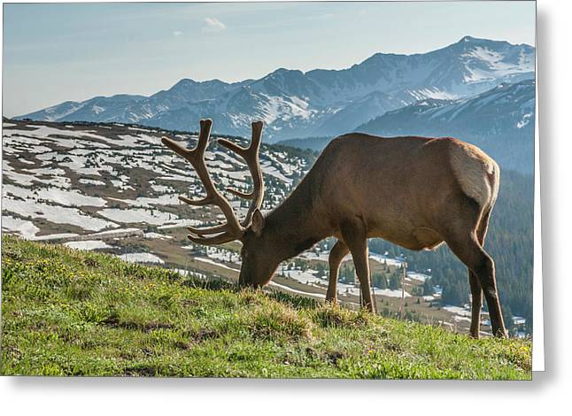 Usa, Colorado, Rocky Mountain National Greeting Card by Jaynes Gallery