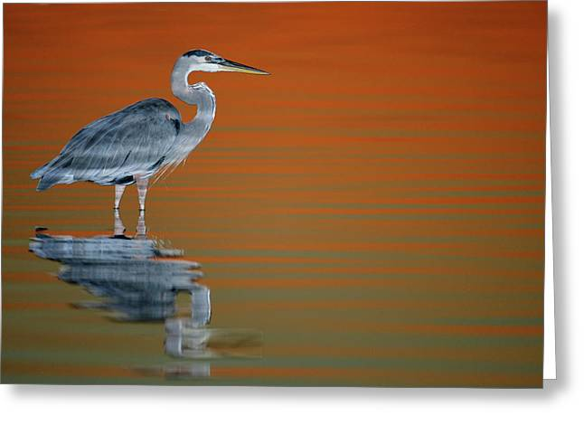 Usa, Florida, St Greeting Card by Jaynes Gallery