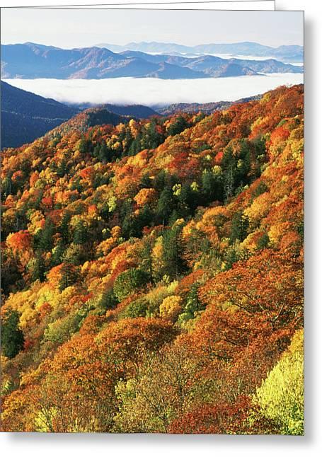 Usa, North Carolina, Great Smoky Greeting Card