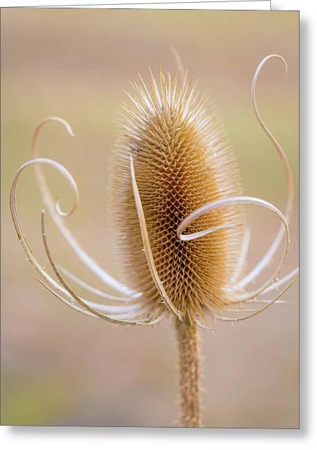 Usa, Oregon, Malheur National Wildlife Greeting Card