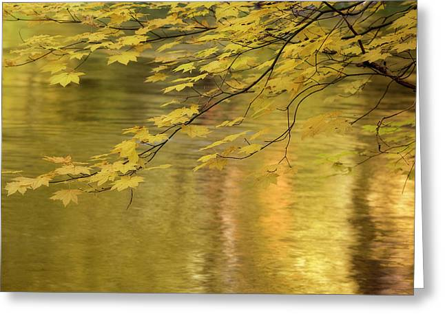 Usa, Oregon, Rogue River National Forest Greeting Card by Jaynes Gallery