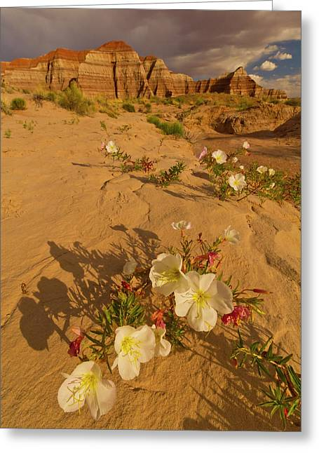 Usa, Utah, Grand Staircase Escalante Greeting Card by Jaynes Gallery