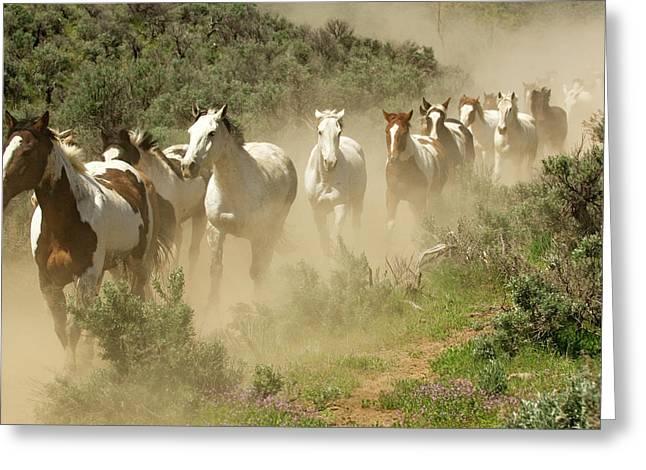 Usa, Washington, Malaga, Running Horses Greeting Card by Jaynes Gallery