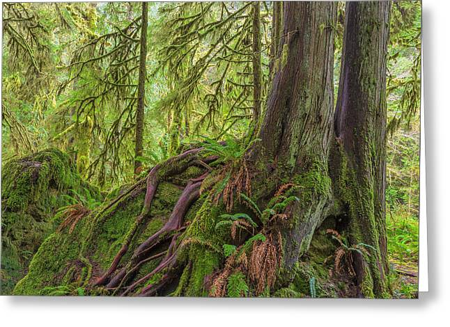 Usa, Washington State, Olympic National Greeting Card by Jaynes Gallery