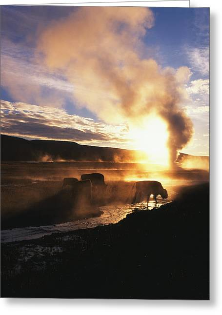Usa, Wyoming, Yellowstone National Greeting Card