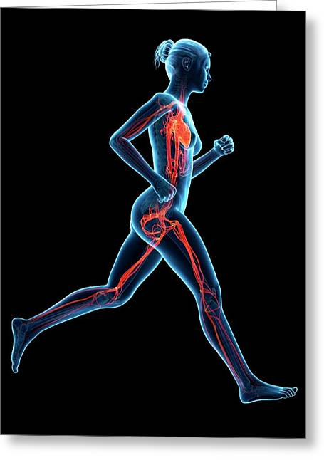 Vascular System Of A Runner Greeting Card