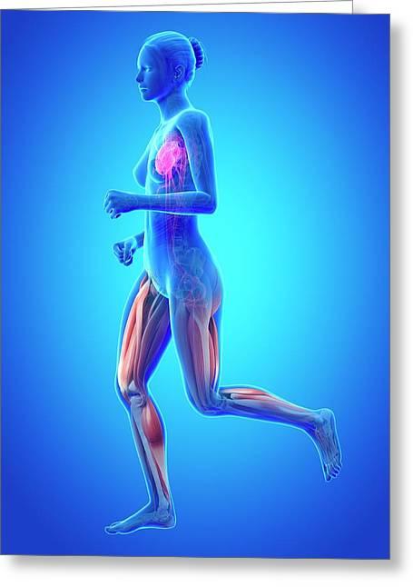Vascular System Of Runner Greeting Card by Sebastian Kaulitzki