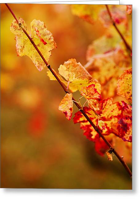 Vineyard In Autumn, Gaillac, Tarn Greeting Card