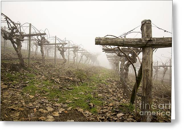 Vineyard In The Fog Greeting Card
